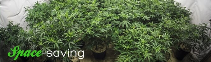 space saving weed growing techinique