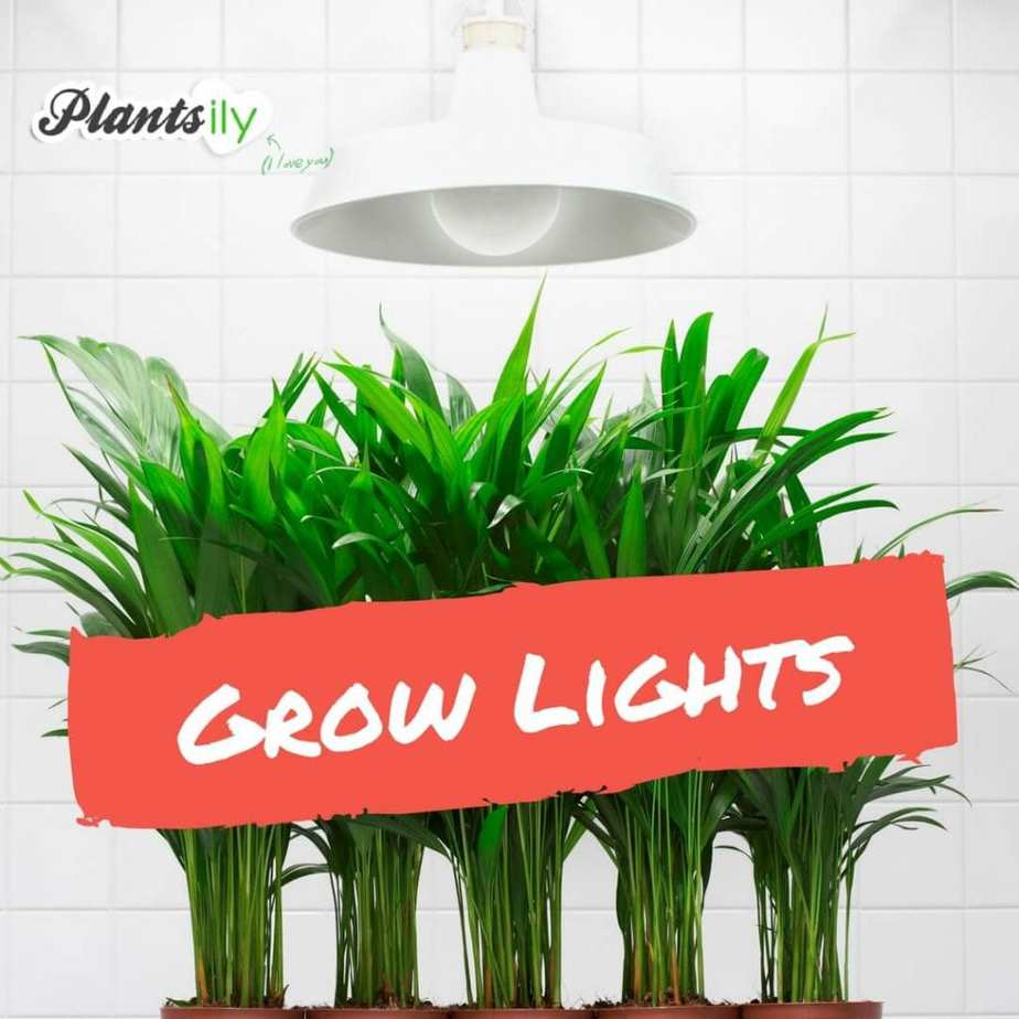 Buy High Pressure Sodium Grow lights on Amazon