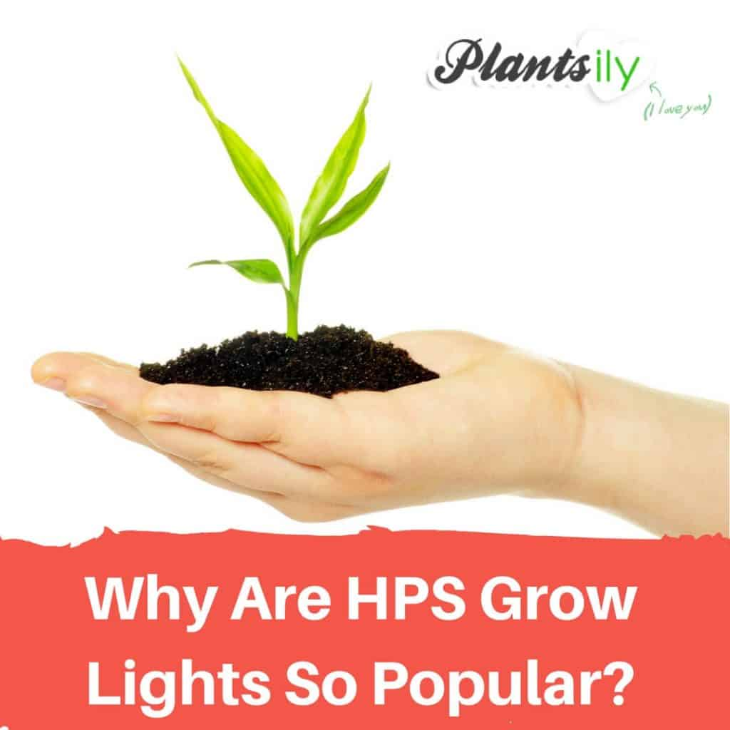 Why Are HPS Grow Lights So Popular