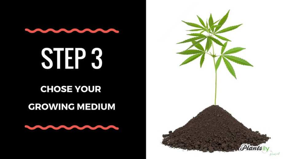 chose your growing medium