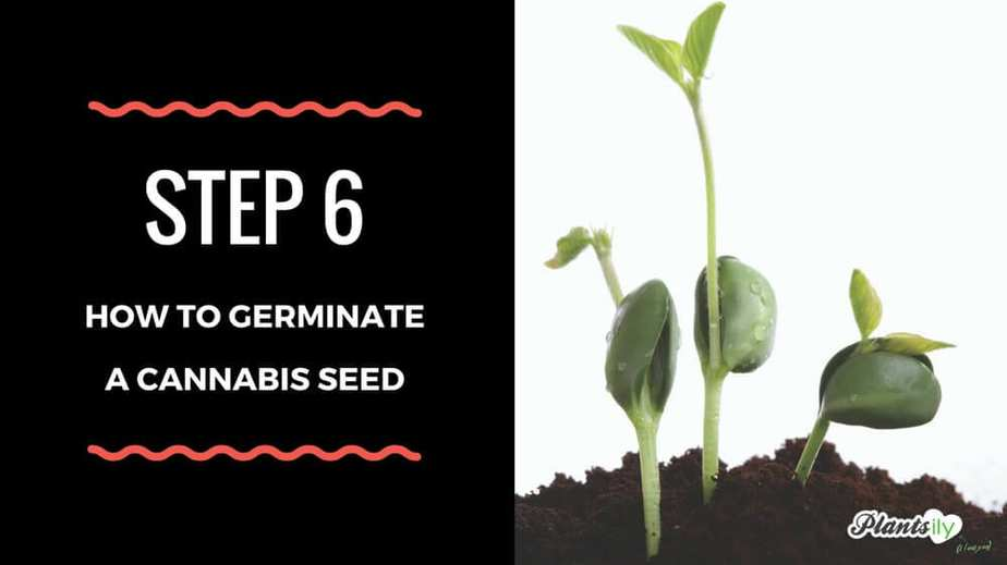 germinate your seeds
