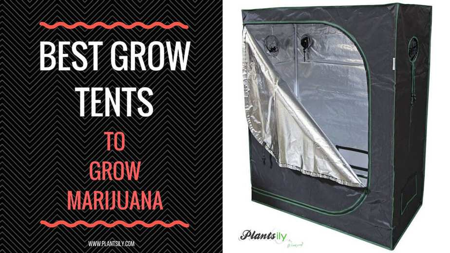 Grow tents provide the ideal environment for growing marijuana and other plants. They allow you to keep your plants warm if the weather is cold by using ... & Top 10 Grow Tent for Growing Cannabis in 2019 with Setup Guide | How ...