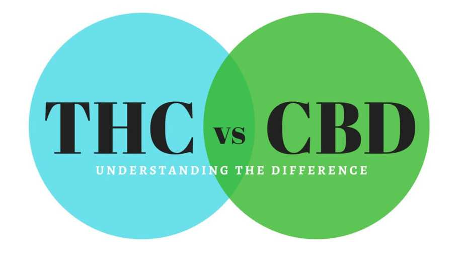 Image result for Understanding THC, CBD