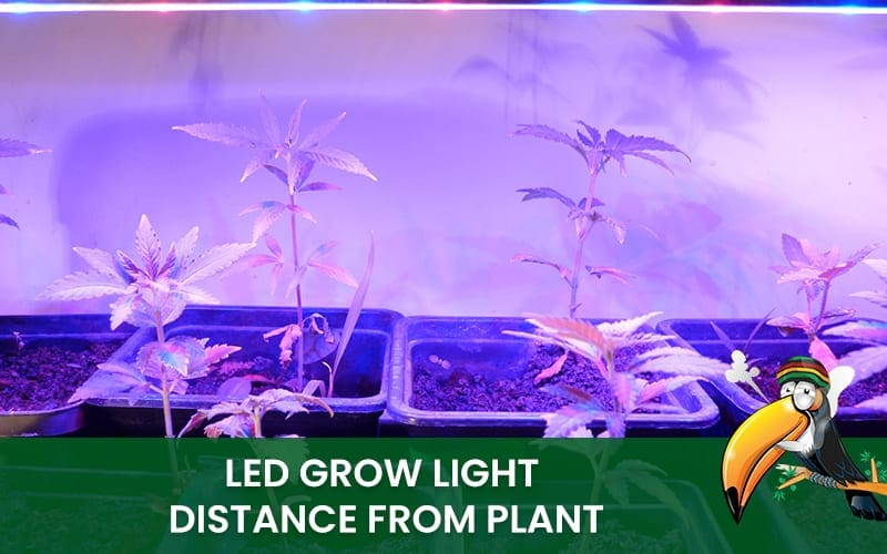 Led Grow Light Distance from Plant