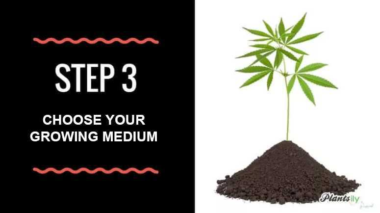 choose your growing medium