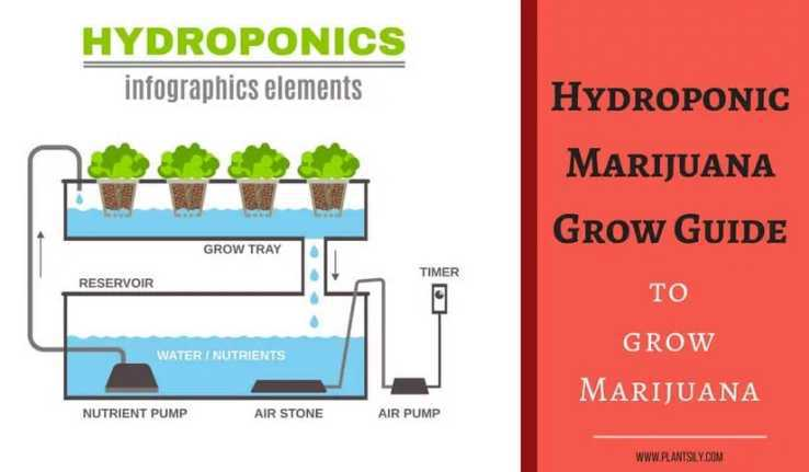 hydroponics marijuana grow guide