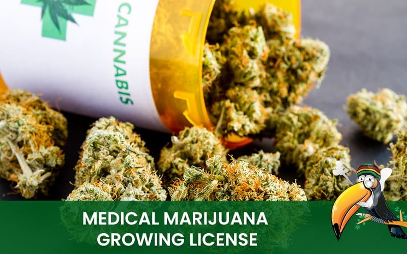 Medical Marijuana Growing License