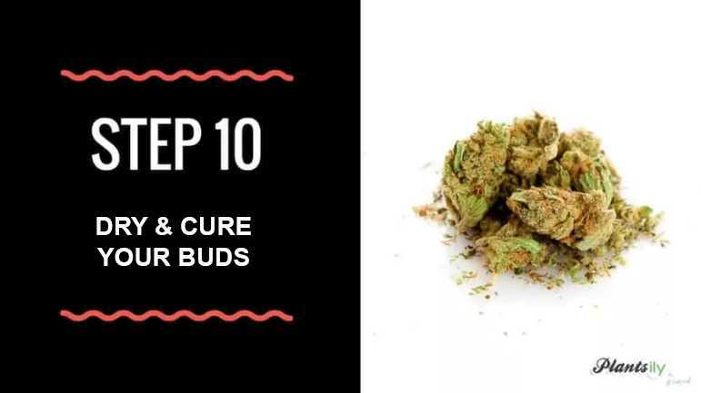 dry and cure your buds