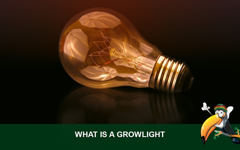 What is a Growlight