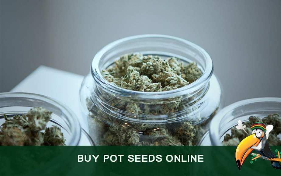 Buy Pot Seeds Online