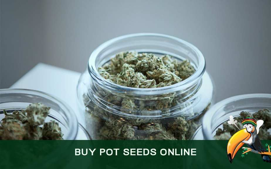 How to Buy Pot Seeds Online From Reputable Suppliers