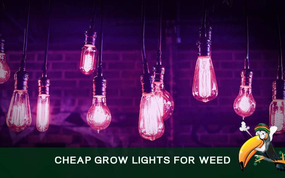 Cheap Grow Lights for Weed