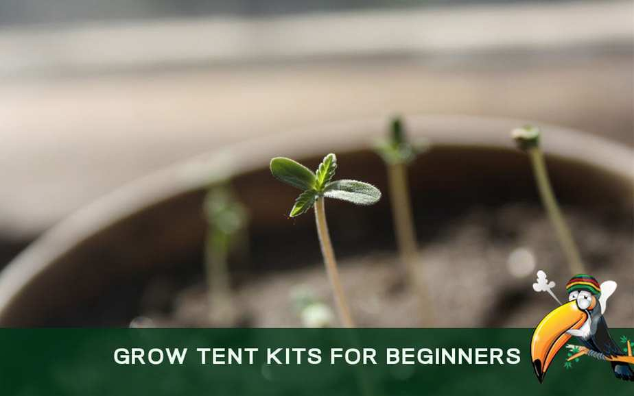 Grow Tent Kits for Beginners