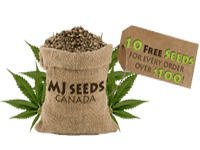mjseeds-canada-logo