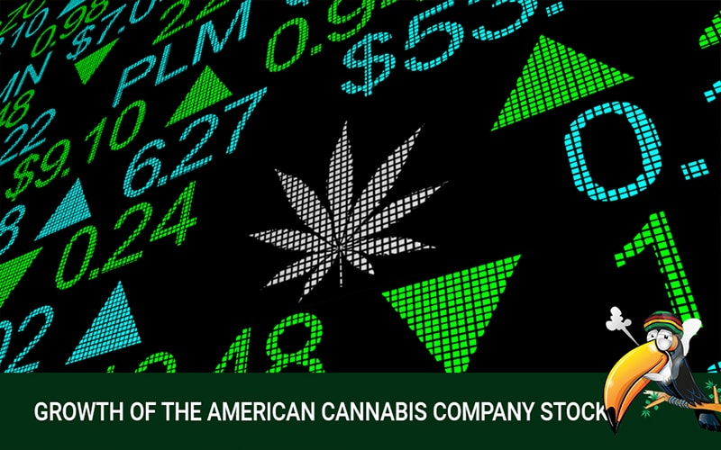 The Growth of the American Cannabis Company Stock in the Market
