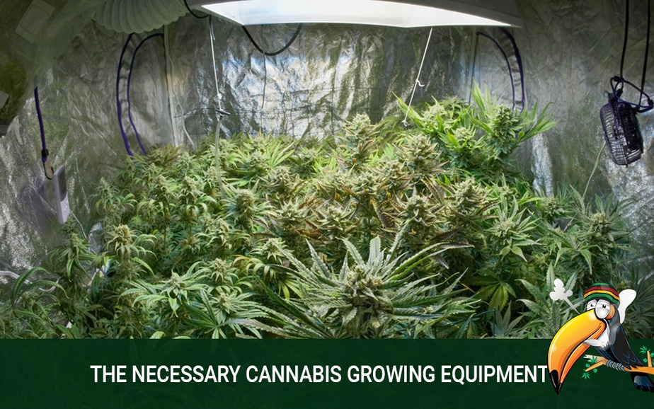 Start on the Right Foot with Cannabis Growing Equipment
